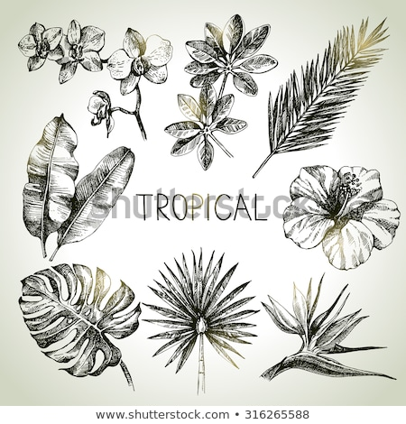 Monstera Tropical Exotic Leaf Color Hand Drawn Vector Stock photo © pikepicture