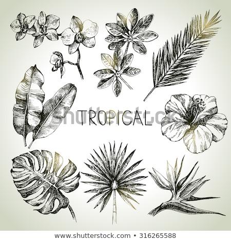 Tropikalnych egzotyczny liści kolor wektora Zdjęcia stock © pikepicture