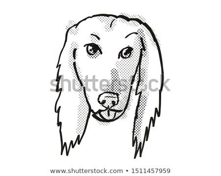 Afghan Hound Dog Breed Cartoon Retro Drawing Stock photo © patrimonio