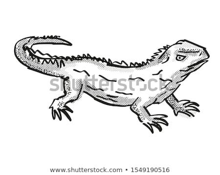 Új-Zéland vadvilág rajz retro rajz stílus Stock fotó © patrimonio