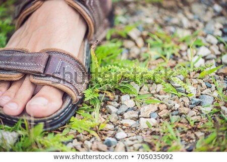 Male feet trample ambrosia, causing allergy in many people Stock photo © galitskaya