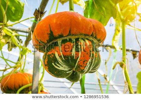 Turbante laranja abóbora decoração pedra Foto stock © sarahdoow