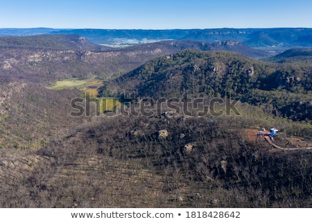 Bush recovery after bushfires in Blue Mountains Australia Stock photo © lovleah