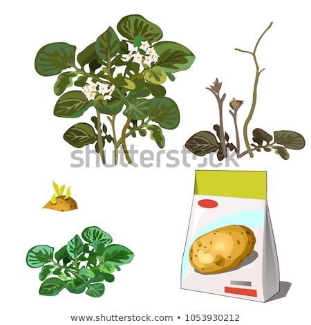 Set of stages of life of a agricultural plant potatoes isolated on white background. Paper packaging Stock photo © Lady-Luck