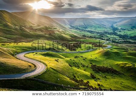 道路 美しい シーン 緑 木 ストックフォト © HypnoCreative