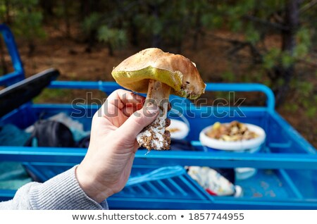 woman hunting for wild mushrooms stock photo © photography33