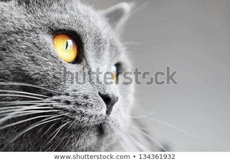 macska · fehér · mosoly · kék · kommunikáció · vicces - stock fotó © Shevlad