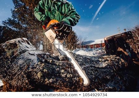 Favágó dolgozik láncfűrész erdő fa férfi Stock fotó © filmstroem