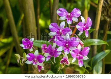Giallo orchidee isolato bianco fiori natura Foto d'archivio © blinztree