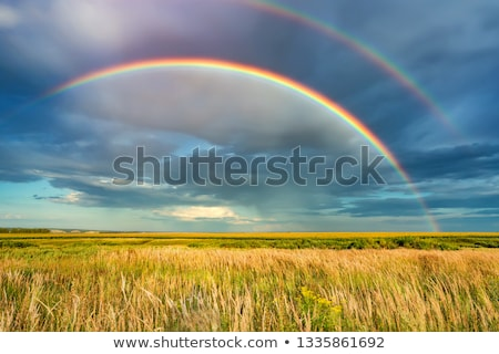 rainbow over the field stock photo © razvanphotography