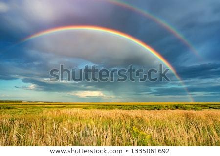 Stockfoto: Regenboog · veld · mooie · granen · afstand