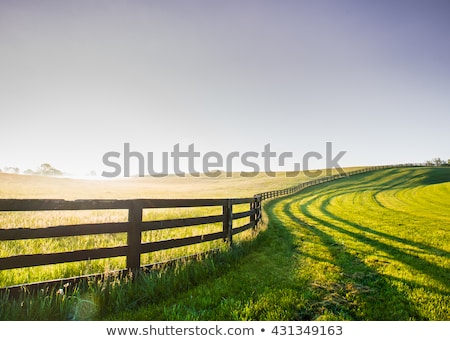 Rural landscape at dawn stock photo © nature78