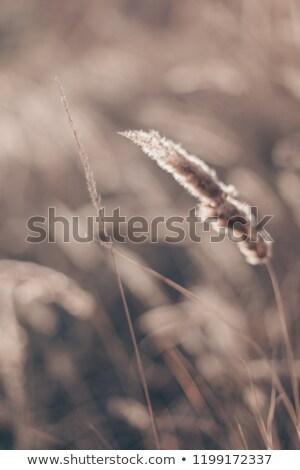 çim · plaj · bağbozumu · çayır · bahar · yaz - stok fotoğraf © reicaden
