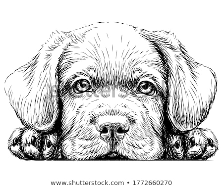 Black and white dogs Stock photo © c-foto