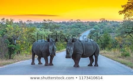 Stock fotó: Fekete · orrszarvú · park · egy · nagy · állatok