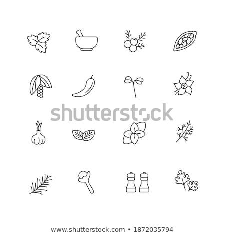cress chili Stock photo © Moradoheath
