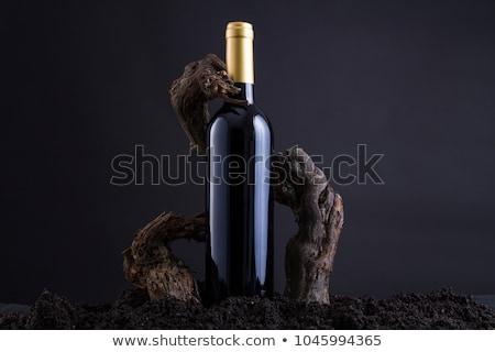 Tradicional videira garrafa coberto isolado branco Foto stock © taviphoto