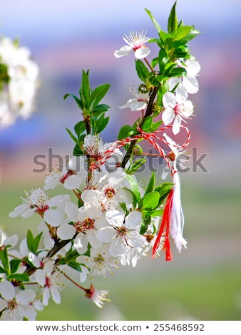 roumain · symbole · début · printemps · arbre · rouge - photo stock © alinbrotea