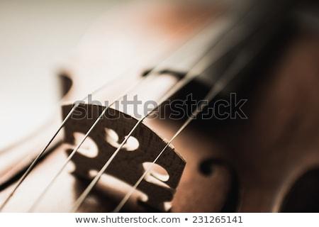 Close up shot of  violins Stock photo © FreeProd