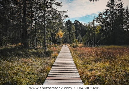 Wooden bridge through the swamp in a forest Stock photo © Steffus