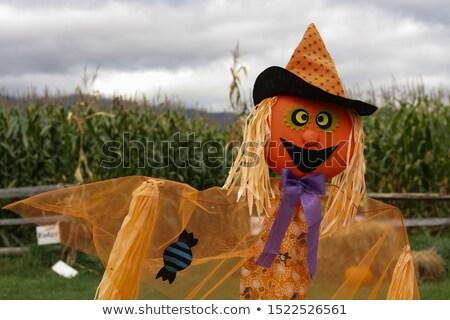 Scarecrow Maze Stock photo © Undy