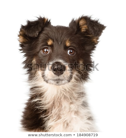 Stock photo: funny ears mixed breed dog portrait in gray studio