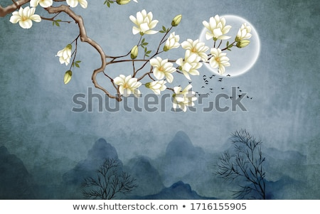 magnolia · bloemen · roze · witte · boom · hemel - stockfoto © klinker