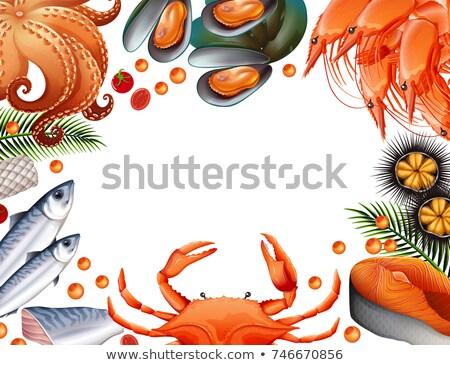Sablon különböző tengeri hal illusztráció keret művészet Stock fotó © bluering