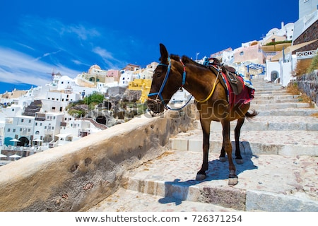 Santorini Donkeys Stock photo © fazon1