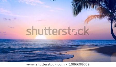 Arte bella tramonto tropicali spiaggia tropicale Foto d'archivio © Konstanttin