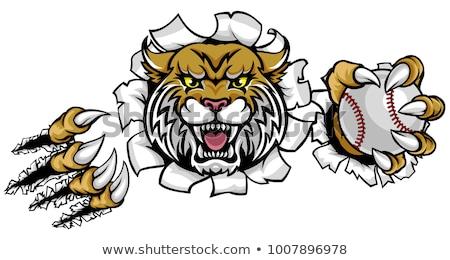 wildcat holding baseball ball mascot stock photo © krisdog