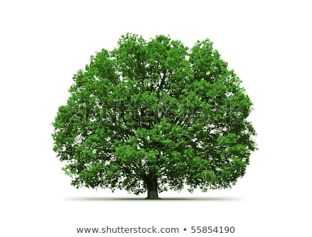 Huge trunk of the ancient oak tree Stock photo © hraska