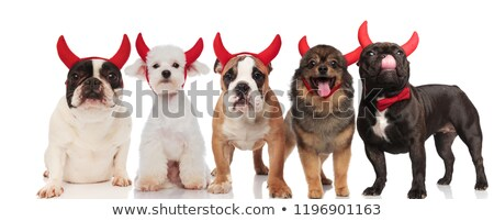 Сток-фото: Funny Group Of Five Dogs Wearing Red Devil Horns