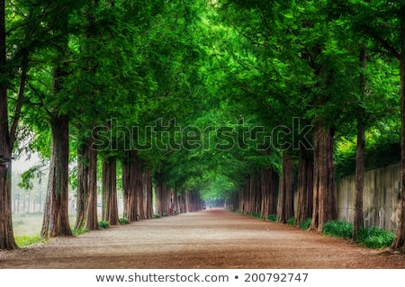 country road lined by large green trees stock photo © monkey_business