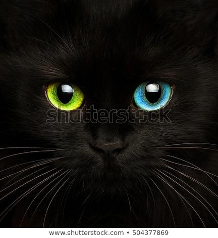 Gato preto olhos diferente cores bonitinho Foto stock © vlad_star