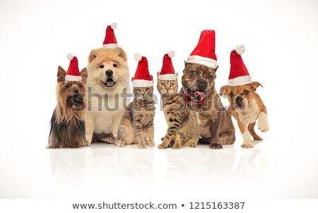 Cute · группа · восемь · собаки · сидят - Сток-фото © feedough