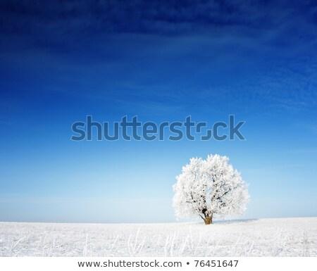 Fagyos nap kék ég téli tájkép copy space szöveg Stock fotó © Kotenko