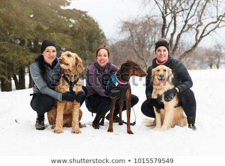 Stockfoto: Vrouw · groep · leuk · winterseizoen · honden · hond