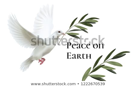 white dove peace with olive branch stock photo © krisdog