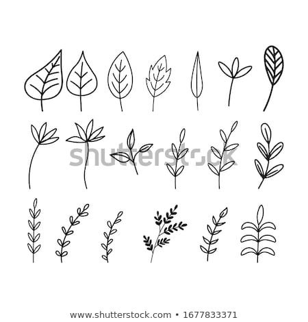 hand-drawn leaves tropical botanical foliage Stock photo © Margolana