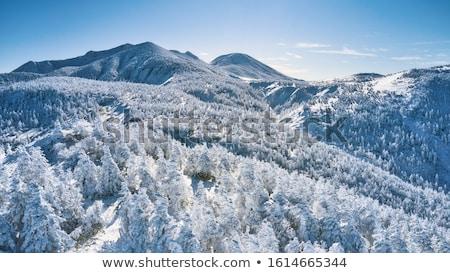 Inverno foresta Giappone natura panorama fauna selvatica Foto d'archivio © dolgachov