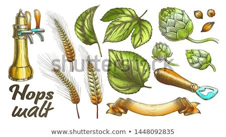 цвета хмель листьев ячмень пшеницы рожь Сток-фото © pikepicture