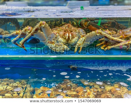 Alive lobster inside an aquarium at a seafood market Stock photo © galitskaya