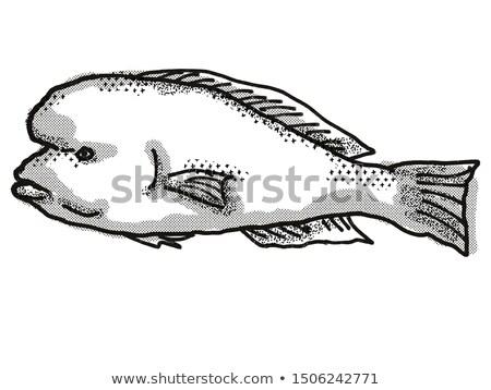 Doubleheader Australian Fish Cartoon Retro Drawing Stock photo © patrimonio