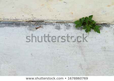 Stock photo: A flower sprouted up through the rock