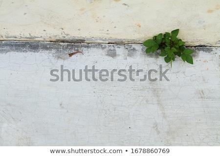 Stockfoto: Bloem · omhoog · rock · muur · natuur · blad