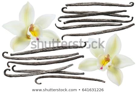 Vanilya yalıtılmış beyaz üst görmek arka plan Stok fotoğraf © ThreeArt