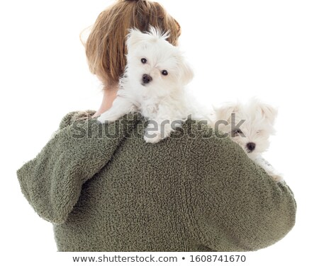 Woman Holding Two Young Maltese Puppies Isolated on White Stock photo © feverpitch
