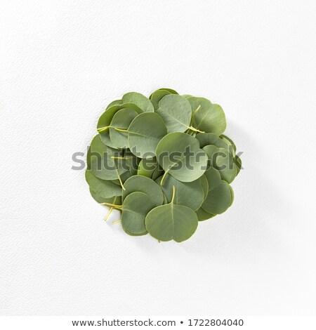 Evergreen foglie bianco fresche pattern Foto d'archivio © artjazz