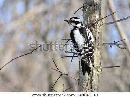 женщины · старые · сушат · дерево · птица · черный - Сток-фото © stockfrank